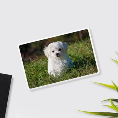 Pet Photo Custom Powerbank
